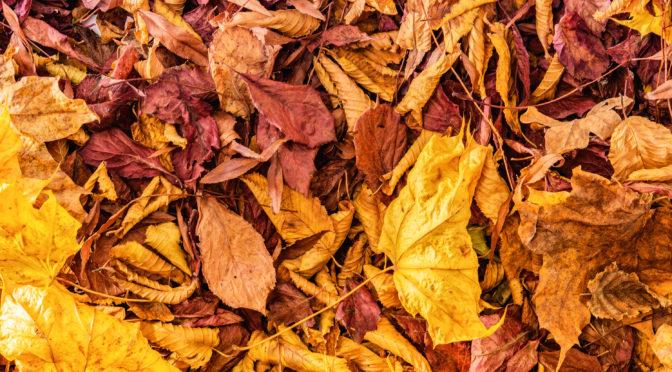 7 Gründe, warum wir uns auf den Herbst freuen sollten