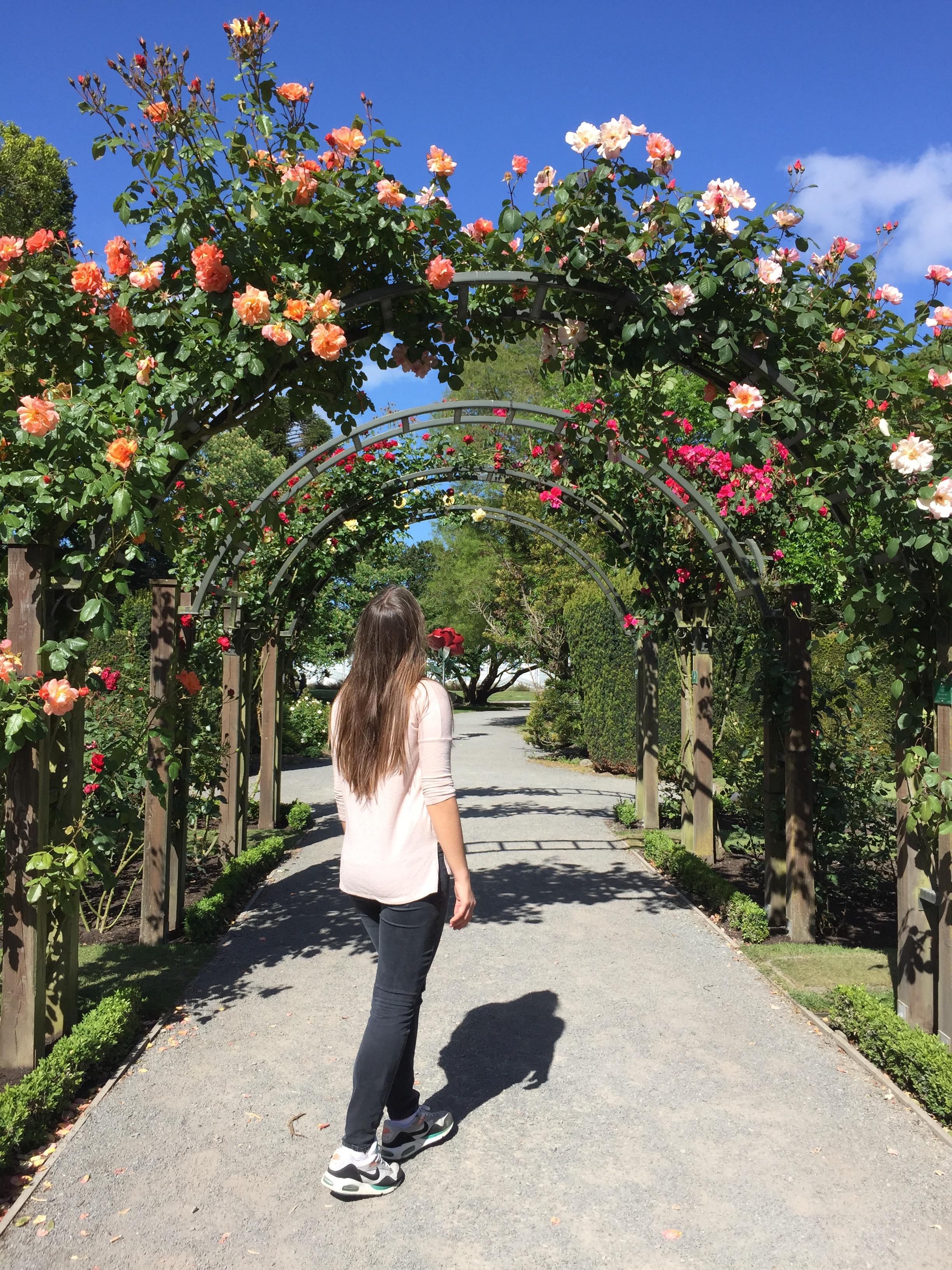 Der wunderschöne Rosengarten im Hagley Park